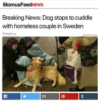 Homeless, Memes, and News: MomusFeedNEws  Breaking News: Dog stops to cuddle  with homeless couple in Sweden  Posted on  @tank.sinatra https://t.co/NkLNdJROr2