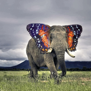 Monarch Elephant: Monarch Elephant