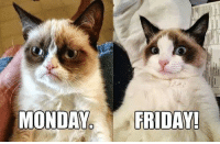 Let's purrrtend it's Friday. #cats #monday #friday #gameface #catlover: MONDAY  FRIDAY! Let's purrrtend it's Friday. #cats #monday #friday #gameface #catlover
