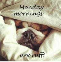 Monday  mornings.  are ruff! Monday mornings are ruff.    Good Morning All, have a great Monday