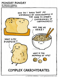 Complex, Life, and Tumblr: MONDAY PUNDAY  BY GEMMA CORRELL  WWw.GEMMACORRELL.COM  How Do KNOw THAT MY  EXPERIENCE OF CONSCIOUSNESS IS  THE SAME AS OTHER'S  '' EXPERIENCES OF  CONSCIOUSNESS?  WHY ARE WE  HERE?  WHAT IS MY  PURPOSE?  WHAT IS THE  MEANING OF LIFE?  COMPLEX CARBOHYDRATES  © GEMMA CORRELL / www.genmacorrell.com srsfunny:  The Complex Kind