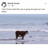 Funny, Cow, and Can: Mondli Zondo  1 hr  I don't know what this cow is going through but I can  relate. 🚨Warning🚨 Do not follow @DONUT if you're easily offended 🤬🔞