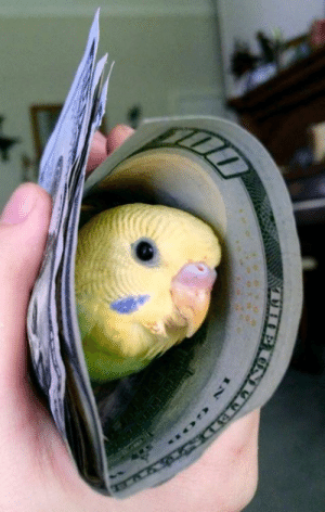 Money, Happiness, and Can: money can't buy you happiness, but it can buy you a birb birb = happiness