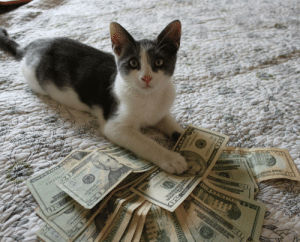 money cat and you will receive some economic luck in the next 48 hours: money cat and you will receive some economic luck in the next 48 hours