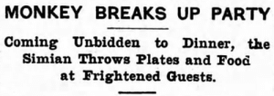 yesterdaysprint:   The Virginia Enterprise, Minnesota, January 5, 1906 : MONKEY BREAKS UP PARTY  Coming Unbidden to Dinner, the  Simian Throws Plates and Food  at Frightened Guests. yesterdaysprint:   The Virginia Enterprise, Minnesota, January 5, 1906