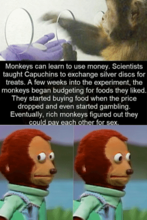 Monkey business goes *stonks* by KebabChef MORE MEMES: Monkey business goes *stonks* by KebabChef MORE MEMES