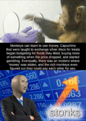 Monkey economy is doing well: Monkeys can learn to use money. Capuchins  that were taught to exchange silver discs for treats  began budgeting for foods they liked, buying more  of something when the price dropped, and started  gambling. Eventually, there was an incident where  'money' was stolen, and the rich monkeys even  figured out they could pay each other for sex.  560  .286 A  2.286 14563  156 0287  stonks  1.9%  0.12%  0.168 Monkey economy is doing well