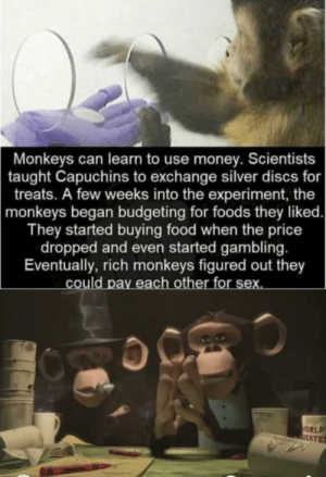 Sex, Drug, Alcohol: Monkeys can learn to use money. Scientists  taught Capuchins to exchange silver discs for  treats. A few weeks into the experiment, the  monkeys began budgeting for foods they liked.  They started buying food when the price  dropped and even started gambling.  Eventually, rich monkeys figured out they  could pay each other for sex.  ORLD  DEATES Sex, Drug, Alcohol