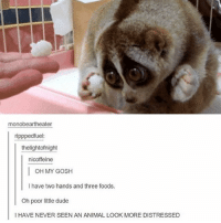 Dude, Funny, and Memes: monobeartheater  rippped fuel:  thelightofnight  nicoffeine  I OH MY GOSH  have two hands and three foods.  Oh poor little dude  I HAVE NEVER SEEN AN ANIMAL LOOK MORE DISTRESSED Poor thing! (Check link in bio!) funnyfriday funnytumblr tumblr funny tumblrtextpost funnytumblrtextpost funny haha humor hilarious harrypotter funnyharrypotter harrypotterhumor