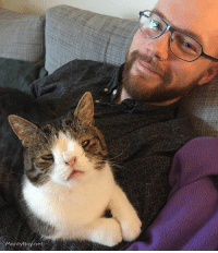 Being Alone, Cats, and Instagram: Monty Boy net Adopt a cat and you will never watch tv alone again... Or pee. Or eat. Or sleep... 😉 AdoptDontShop CatDad ilovemycat lovecats catstagram cats_of_world CatsAreFamily cats_of_instagram love