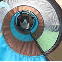 Bored, Cats, and Memes: Monty loves to play in his tunnels! He has three of them and runs around in them to make a lot of noise (especially really early in the morning 😂) He can run through a tunnel over and over and doesn't get bored! What's your cats' favorite toy to play with? 😊 Attack 123attack Playtime Fun ForeverKitten