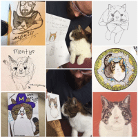 Caturday, Memes, and 🤖: monty  uohi on  Whisha  Abra,  Ka  MONTY POTTE  MONTY Happy Caturday everyone 😸 I love these PAWsome drawings made by some fantastic people 😻💜🎉 Thank you so much for all the love 😽💜 Happiness and purrs for everyone 😸 art Woohoo Ifeelsolucky love amazingdrawing amazingdrawings cat