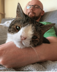 Being Alone, Memes, and Watch: MontyBoy.net Adopt a cat and you will never watch tv alone again... Or pee. Or eat. Or sleep... 😝 AdoptDontShop CatDad ilovemycat sheltercat sheltercatsofinstagram myboy