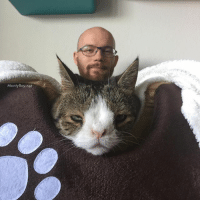 I just found this funny picture on my phone. I think it looks like my head is photoshopped on top of Monty's 😂 How would you caption this? 😄 Happy Caturday everyone 💜: MontyBoy.net I just found this funny picture on my phone. I think it looks like my head is photoshopped on top of Monty's 😂 How would you caption this? 😄 Happy Caturday everyone 💜