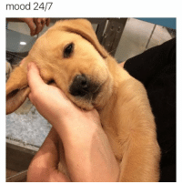 """Lazy, Mood, and Girl Memes: mood 24/7 I'm not lazy- I prefer the term """"selective participation""""."""