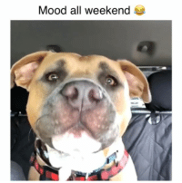 Memes, Mood, and 🤖: Mood all weekend How does he do that (sound on)! Credit: @mothescreamingstaffy