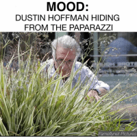 Memes, A Sunday, and Dustin Hoffman: MOOD:  DUSTIN HOFFMAN HIDING  FROM THE PAPARAZZI  Fame fynet Pctures Hiding from the world on a Sunday like