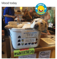 """Mood today  OO  SEEN  b  GREETINGS!  MY NAME IS WAFER!  I'M NOT SICK  (r""""M JUST LAZY  rse Aamg OLD Dor LAB MIX  FM FRIENDLY, PLEASE PET ME  EPET ME  LOVE CAR SCRATCHES  NOT Vest.  #WAFERTHED0g-  ESTES PARK  COMMUNITY  No Public Restroom  THRIFT SHOP  ntiblicos  HORAS  TION  OF funny memes humor humor ingenius meme"""