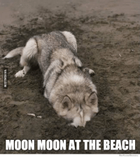 Moonmoon: MOON MOON AT THE BEACH  We Know Memes
