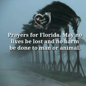 <3: Moonlit  lysties  Prayers for Florida. May no  lives be lost and no harm  be done to man or animal. <3