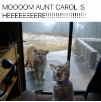 Hide your pool boy...the cougar is back.: MOOOOM AUNT CAROL IS  HEEEEEEEERE! Hide your pool boy...the cougar is back.