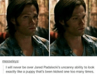 I'm going to my friend's birthday party and I'm really hoping they have good food: mooseleys:  I will never be over Jared Padalecki's uncanny ability to look  exactly like a puppy that's been kicked one too many times. I'm going to my friend's birthday party and I'm really hoping they have good food