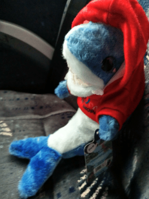 Shark, Mop, and Bus: MOP Bus Buddy, Stuffed Shark in a Hoody.