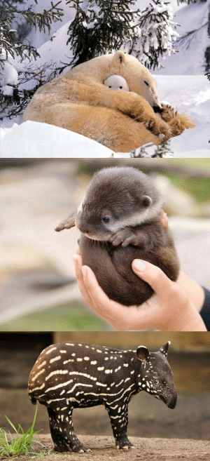 More cute baby animals: More cute baby animals