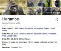 "Ass, Crazy, and Memes: More images  Harambe  Western lowland gorilla  Born: May 27, 1999, Gladys Porter Zoo, Brownsville, Texas, United  States  Died: May 28, 2016, Cincinnati Zoo and Botanical Garden, Cincinnati,  Ohio, United States  Date: May 28, 2016; 22 months ago  Cause: Lil crazy ass kid jumped into my niggas enclosure and got him  killed  Location: Cincinnati Zoo <p>It&rsquo;s been 2 years since his majesty has passed.. #NeverForget via /r/memes <a href=""https://ift.tt/2xmjMQl"">https://ift.tt/2xmjMQl</a></p>"