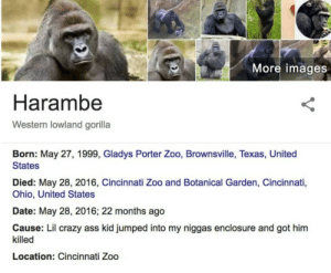 Ass, Crazy, and Date: More images  Harambe  Western lowland gorilla  Born: May 27, 1999, Gladys Porter Zoo, Brownsville, Texas, United  States  Died: May 28, 2016, Cincinnati Zoo and Botanical Garden, Cincinnati,  Ohio, United States  Date: May 28, 2016; 22 months ago  Cause: Lil crazy ass kid jumped into my niggas enclosure and got him  killed  Location: Cincinnati Zoo