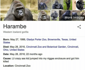 Ass, Crazy, and Date: More images  Harambe  Western lowland gorilla  Born: May 27, 1999, Gladys Porter Zoo, Brownsville, Texas, United  States  Died: May 28, 2016, Cincinnati Zoo and Botanical Garden, Cincinnati,  Ohio, United States  Date: May 28, 2016; 22 months ago  Cause: Lil crazy ass kid jumped into my niggas enclosure and got him  killed  Location: Cincinnati Zoo Its been 2 years since his majesty has passed.. #NeverForget