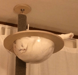 More proof that cats are liquid: More proof that cats are liquid