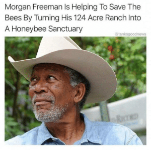 Morgan Freeman is wholesome!: Morgan Freeman Is Helping To Save The  Bees By Turning His 124 Acre Ranch Into  A Honeybee Sanctuary  @tanksgoodnews Morgan Freeman is wholesome!