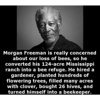 Memes, Morgan Freeman, and Mississippi: Morgan Freeman is really concerned  about our loss of bees, so he  converted his 124-acre Mississippi  ranch into a bee refuge. He hired a  gardener, planted hundreds of  flowering trees, filled many acres  with clover, bought 26 hives, and  turned himself into a beekeeper. 🐝🌻