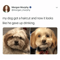 Drinking, Haircut, and Lol: Morgan Murphy  @morgan_ murphy  my dog got a haircut and now it looks  like he gave up drinking LOL