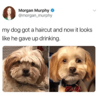 Drinking, Haircut, and Memes: Morgan Murphy  @morgan murphy  my dog got a haircut and now it looks  like he gave up drinking Proud of you dog! @hilarious.ted always posting hilarious doggos. Twitter morgan_murphy