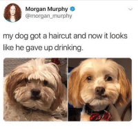 Drinking, Haircut, and Memes: Morgan Murphy  @morgan_murphy  my dog got a haircut and now it looks  like he gave up drinking. Good for him 😂