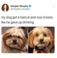 Drinking, Funny, and Haircut: Morgan Murphy  @morgan_murphy  my dog got a haircut and now it looks  like he gave up drinking Good boy