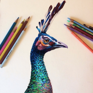 morgandavidsonart:Peacock sketch using colored pencil on a watercolor base! Just playing around with base coats for colored pencils that I could use on some of my illustrations!: morgandavidsonart:Peacock sketch using colored pencil on a watercolor base! Just playing around with base coats for colored pencils that I could use on some of my illustrations!