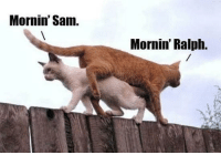 Cats, Sam, and Morning: Mornin' Sam.  Mornin' Ralph. Cats morning stroll