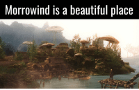 Morrowind is a beautiful place it certainly is.