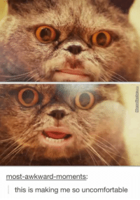 Animals, Cute, and Cute Animals: most-awkward-moments:  this is making me so uncomfortable Most Disturbing Cat-Selfie You've Ever Seen! 🐶🐱🦍 #funny #animalsmeme #memes #cute #animals #animalmeme