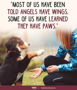 "Memes, Angels, and Wings: ""MOST OF US HAVE BEEN  TOLD ANGELS HAVE WINGS  SOME OF US HAVE LEARNED  THEY HAVE PAWS,  Opets  HealthyPets.Mercola.com ❤️"