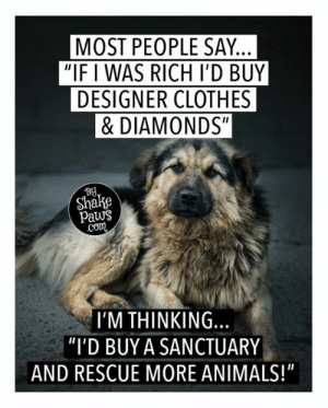 "What would you do?: MOST PEOPLE SAY.  ""IF I WAS RICH I'D BUY  DESIGNER CLOTHES  &DIAMONDS""  BU  Shake  paws  co  I'M THINKING.  ""I'D BUY A SANCTUARY  AND RESCUE MORE ANIMALS!"" What would you do?"