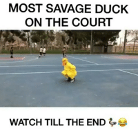 The most savage duck on the court 😂😂😂... .______________________________ From @jaballsitch feat. @arberi_ferraj @marlon_webb @chrisashley_ _ . . Damndaniel DeadAss ThatShitHurted B Facts hellnawtothenawnawnaw ohdontdoit OhMyGod WTF ohshit WHODIDTHIS imdone REALLYBITCH NIGGASAINTSHIT NewYorkersBelike nochill NIGGASBELIKE BITCHESBELIKE blackpeoplebelike whitepeoplebelike BiggasBestBuys: MOST SAVAGE DUCK  ON THE COURT  WATCH TILL THE END The most savage duck on the court 😂😂😂... .______________________________ From @jaballsitch feat. @arberi_ferraj @marlon_webb @chrisashley_ _ . . Damndaniel DeadAss ThatShitHurted B Facts hellnawtothenawnawnaw ohdontdoit OhMyGod WTF ohshit WHODIDTHIS imdone REALLYBITCH NIGGASAINTSHIT NewYorkersBelike nochill NIGGASBELIKE BITCHESBELIKE blackpeoplebelike whitepeoplebelike BiggasBestBuys