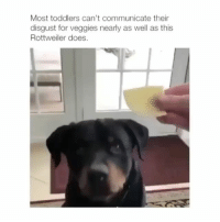 Definitely, Memes, and Animal: Most toddlers can't communicate their  disgust for veggies nearly as well as this  Rottweiler does. He definitely doesn't like his veggies | Follow @cuteandfuzzybunch 👈 for the best animal memes!