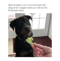 Memes, Email, and Rottweiler: Most toddlers can't communicate their  disgust for veggies nearly as well as this  Rottweiler does No veggies please 😫🙅♂️ (📹: Email 4 this credit)