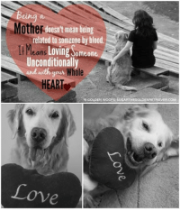 Happy Mother's Day to our friends in Norway <3: Mother  doesn't mean being  related to someone by blood.  ll Means  Loving Someone  Unconditionally  and with.  Whole  your  HEAR  GOLDEN WOOFS SUGARTHEGOLDENRETRIEVER.CoM  Love Happy Mother's Day to our friends in Norway <3