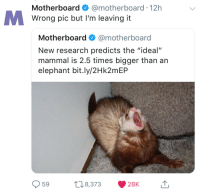 """meirl: Motherboard @motherboard 12h  Wrong pic but I'm leaving it  Motherboard @motherboard  New research predicts the """"ideal""""  mammal is 2.5 times bigger than an  elephant bit.ly/2Hk2mEP  59 8,373 28K 1 meirl"""