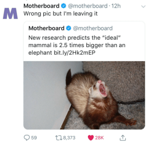 """Elephant, MeIRL, and Motherboard: Motherboard @motherboard 12h  Wrong pic but I'm leaving it  Motherboard @motherboard  New research predicts the """"ideal""""  mammal is 2.5 times bigger than an  elephant bit.ly/2Hk2mEP  59 8,373 28K 1 meirl"""